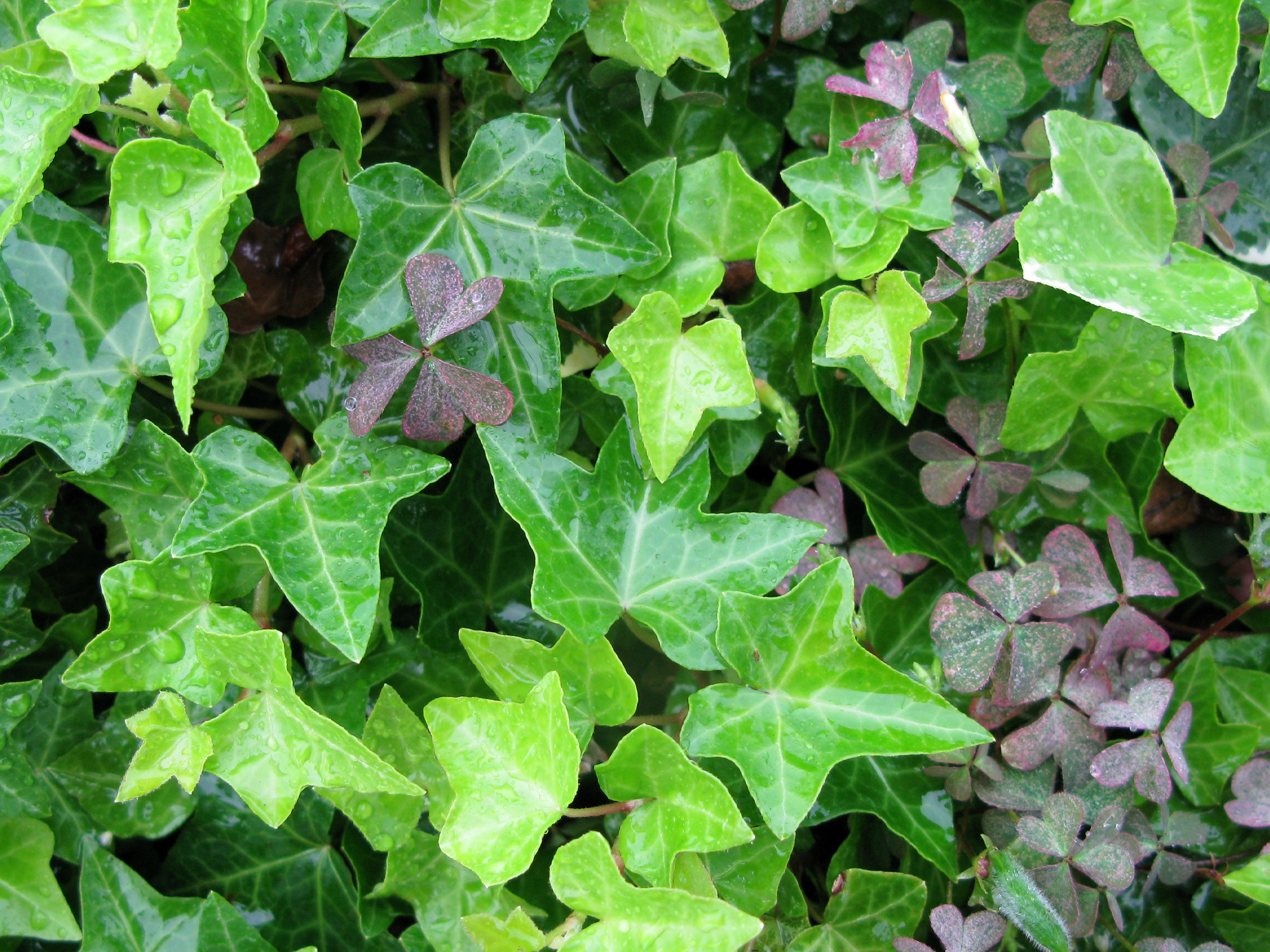 ivy-photo-1-jpcom03.jpg
